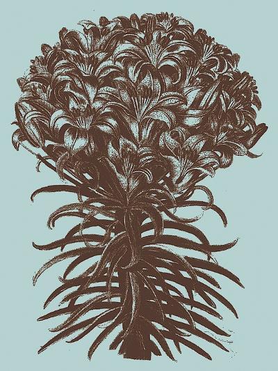 Lilies, no. 18--Art Print