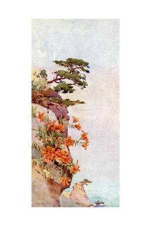 https://imgc.artprintimages.com/img/print/lilies-on-the-rocks-atami_u-l-pp76jn0.jpg?p=0