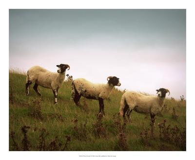 Wooly Friends I