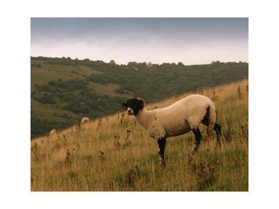 Wooly Friends III