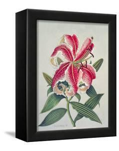Botanical Lily, 1996 by Lillian Delevoryas