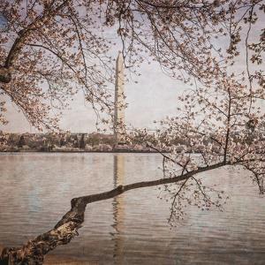 Cherry Blossoms 5 by Lillis Werder
