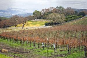 Dormant Vineyard by Lillis Werder