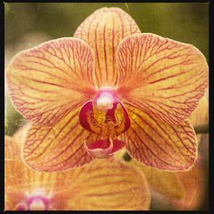 Gold Orchid by Lillis Werder