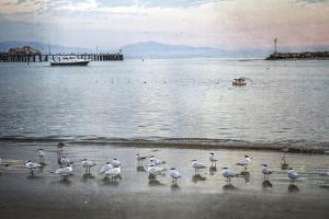 Harbor Birds by Lillis Werder