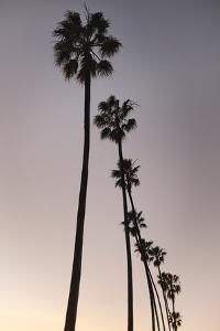 Palm Tree Silhouettes by Lillis Werder