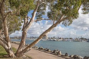 San Diego Harbor by Lillis Werder