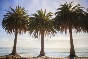 Three Palm Trees by Lillis Werder
