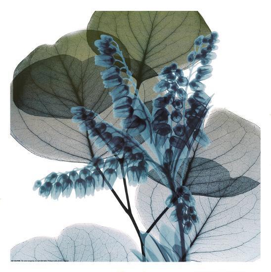 Lilly Of Eucalyptus 2-Albert Koetsier-Art Print
