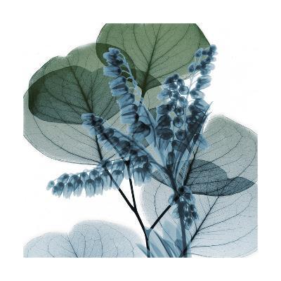 Lilly of Eucalyptus 2-Albert Koetsier-Premium Giclee Print