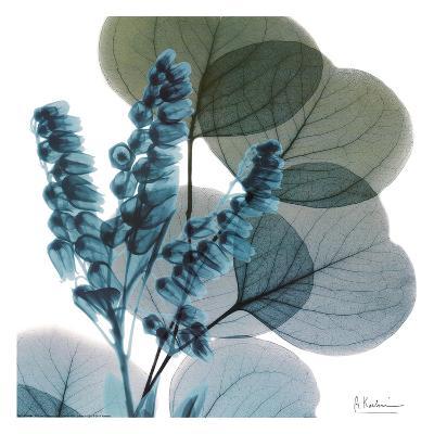 Lilly Of Eucalyptus-Albert Koetsier-Art Print