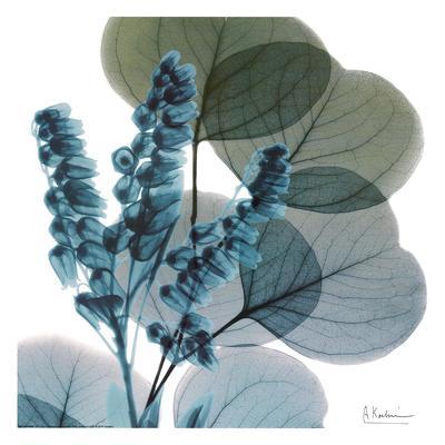 https://imgc.artprintimages.com/img/print/lilly-of-eucalyptus_u-l-f7tzsy0.jpg?p=0