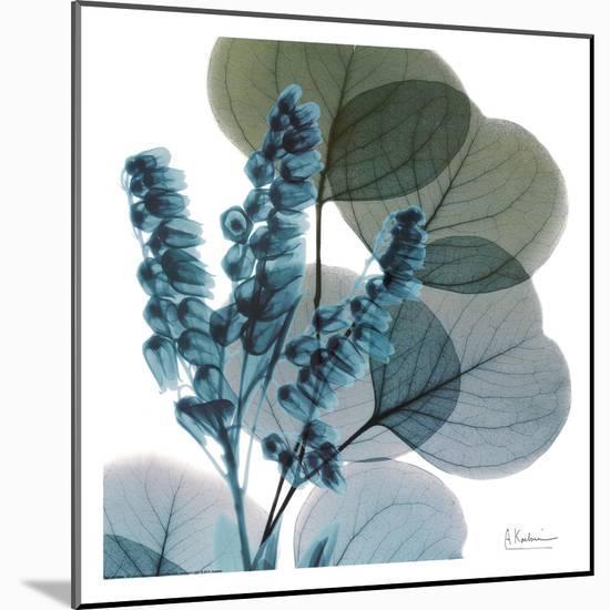 Lilly Of Eucalyptus-Albert Koetsier-Mounted Print