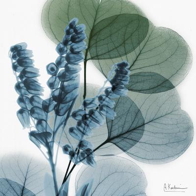 Lilly of Eucalyptus-Albert Koetsier-Premium Giclee Print