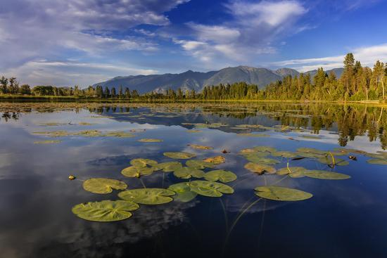 Lilly pads and Swan Range reflects into McWennger Slough, Kalispell,  Montana, USA Premium Photographic Print by Chuck Haney | Art com