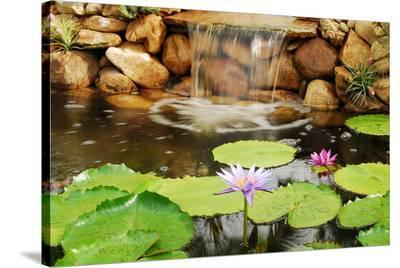 Lilly Pond-Jan Michael Ringlever-Stretched Canvas Print