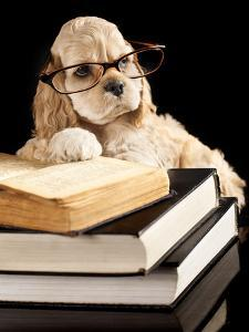 American Cocker Spaniel Wearing Reading Glasses by Lilun
