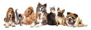 Group of Dogs and Cat Different Breeds, Cat and Dog by Lilun