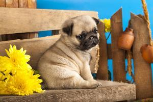 Pug Puppy And Spring Flowers by Lilun