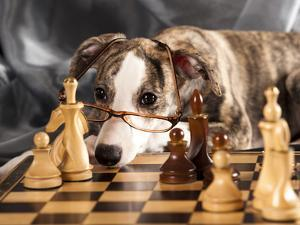 Puppy To Play Chess by Lilun
