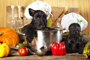 Scotch Terrier Kitchen Boy in a Saucepan, Cook Puppies by Lilun