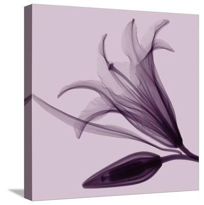 Lily & Bud-Steven N^ Meyers-Stretched Canvas Print