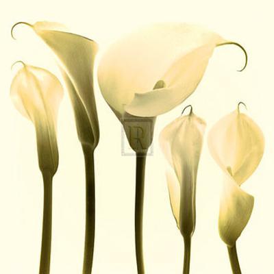Lily Cluster-Katja Marzahn-Art Print