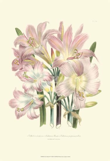Lily Garden IV-Jane W^ Loudon-Art Print