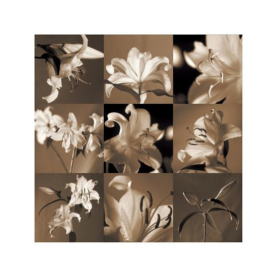 Lily Garden-Caroline Kelly-Giclee Print