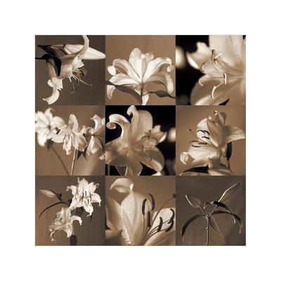 https://imgc.artprintimages.com/img/print/lily-garden_u-l-f7m3vd0.jpg?p=0