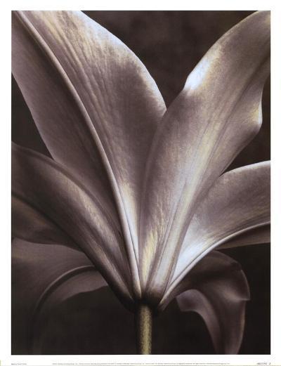 Lily I-Dianne Poinski-Art Print