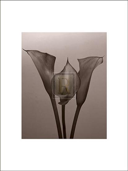 Lily II-Bill Philip-Art Print