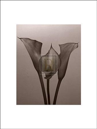 https://imgc.artprintimages.com/img/print/lily-ii_u-l-ei2g00.jpg?p=0