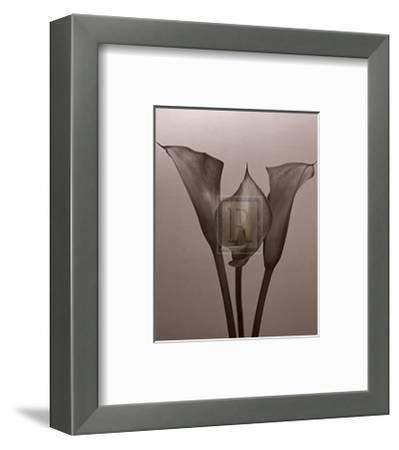 Lily II-Bill Philip-Framed Art Print