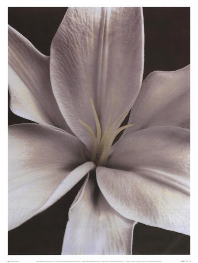 Lily II-Dianne Poinski-Art Print