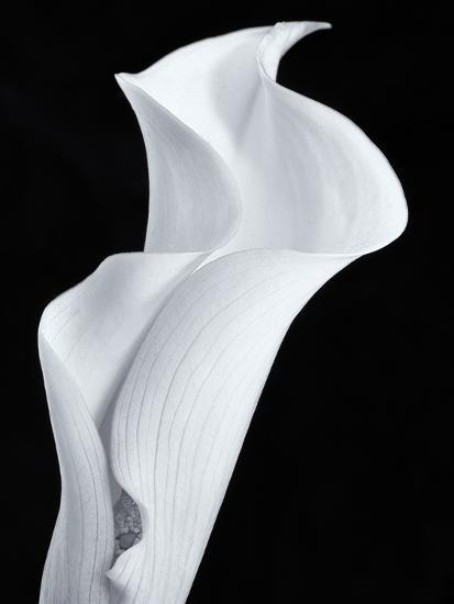Lily in Black and White-Doug Chinnery-Photographic Print