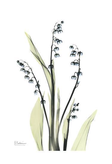 Lily of The Valley in Bloom-Albert Koetsier-Art Print