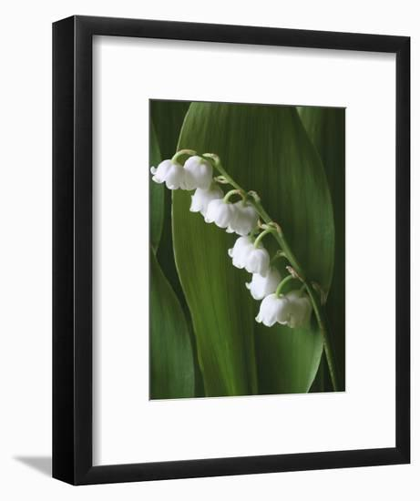 Lily of the Valley-Anna Miller-Framed Photographic Print
