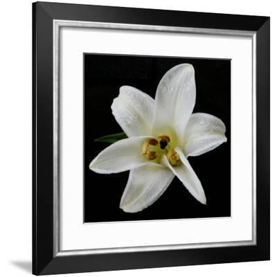 Lily on Black II-Jim Christensen-Framed Photographic Print