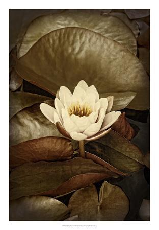 https://imgc.artprintimages.com/img/print/lily-pad-duo-ii_u-l-f8fatg0.jpg?p=0