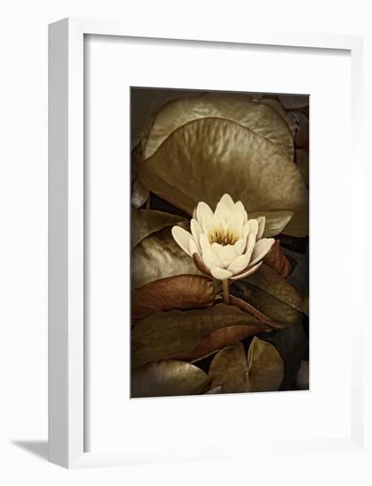 Lily Pad Duo II-Rachel Perry-Framed Art Print