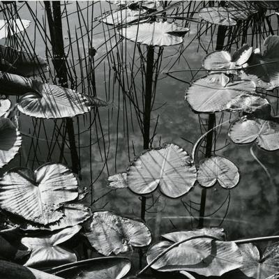 https://imgc.artprintimages.com/img/print/lily-pads-and-water-1973_u-l-q1g6m1y0.jpg?p=0