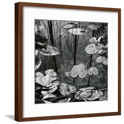 Lily Pads and Water, 1973-Brett Weston-Framed Photographic Print