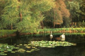 Lily Pond, Shudbrook, Near Lincoln