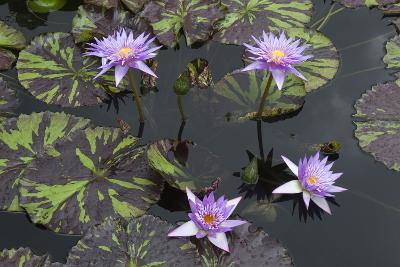 Lily Pond with Water Lilies, New Orleans Botanical Garden, New Orleans, Louisiana, USA-Jamie & Judy Wild-Photographic Print