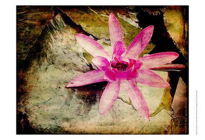 https://imgc.artprintimages.com/img/print/lily-ponds-iv_u-l-f5q40d0.jpg?p=0