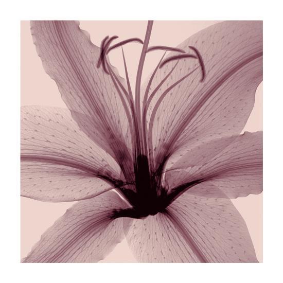 Lily-Steven N^ Meyers-Giclee Print