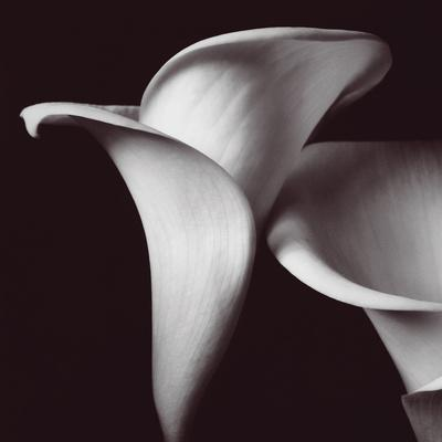 https://imgc.artprintimages.com/img/print/lily_u-l-f8r3hc0.jpg?p=0