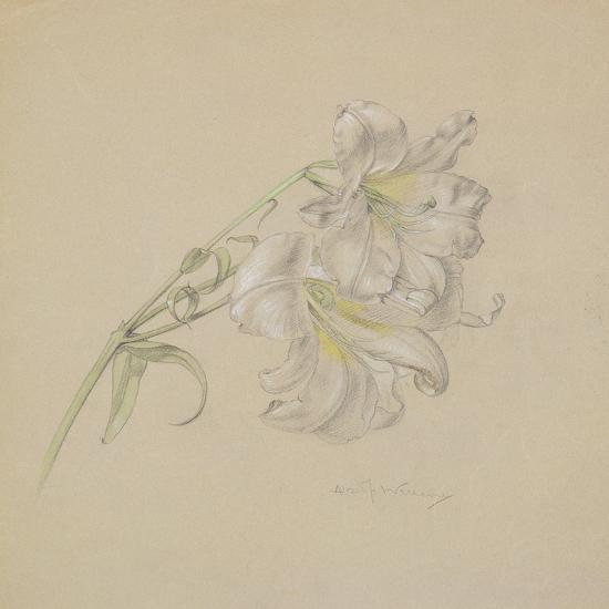 Lily-Albert Williams-Giclee Print