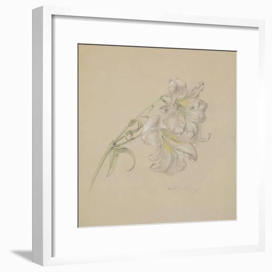 Lily-Albert Williams-Framed Giclee Print